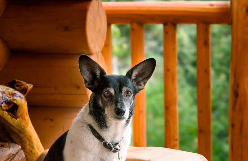 Pets welcome at Blue Beaver Luxury Cabins.
