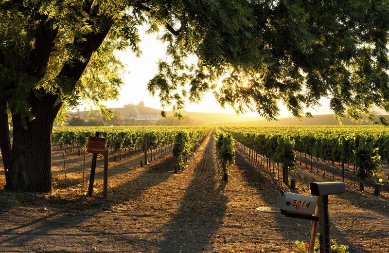 Vineyard near EuroSpa & Inn.
