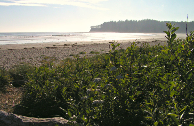 Beach near Olympic Foothills Lodge.