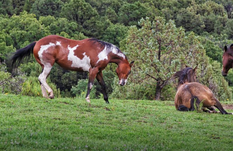 Horses near SkyRidge Inn.