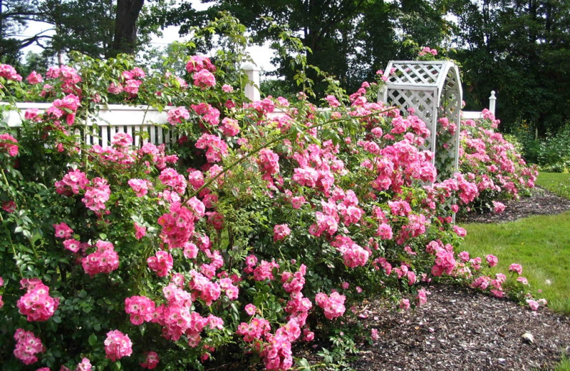 Rose garden at The Heathman Lodge.