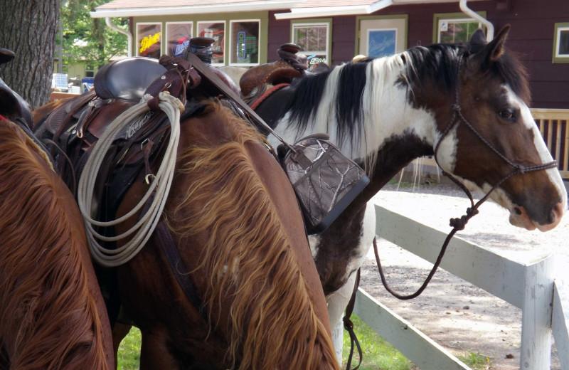 Horses at Rose's Bay Resort.