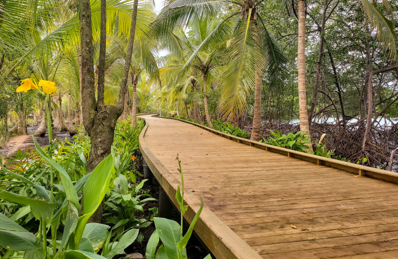 Boardwalk at Bocas Bali Resort.