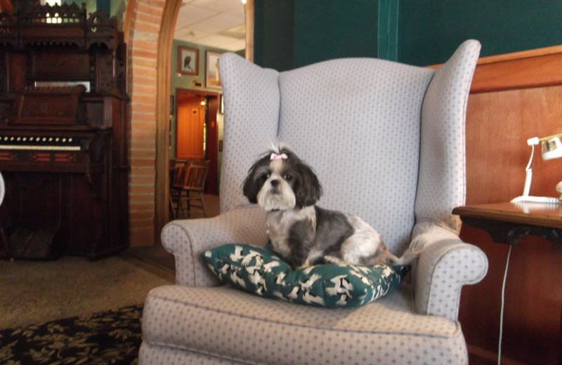 Pets welcome at Kalispell Grand Hotel.