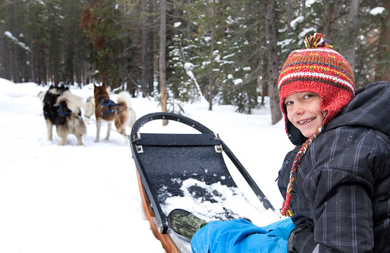 Dog sled at Grand Colorado on Peak 8.