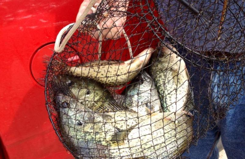 Big catch at Alhonna Resort.