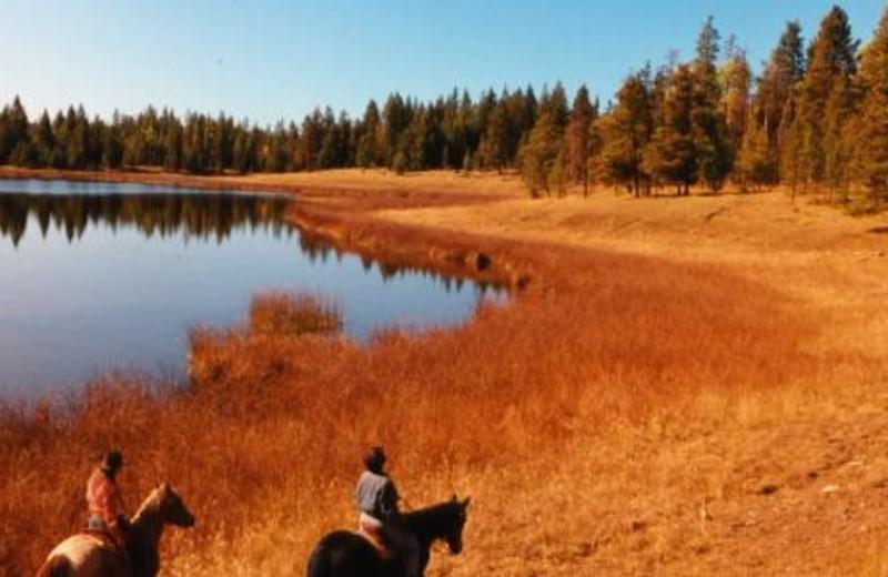 Horseback Riding at Siwash Lake Ranch
