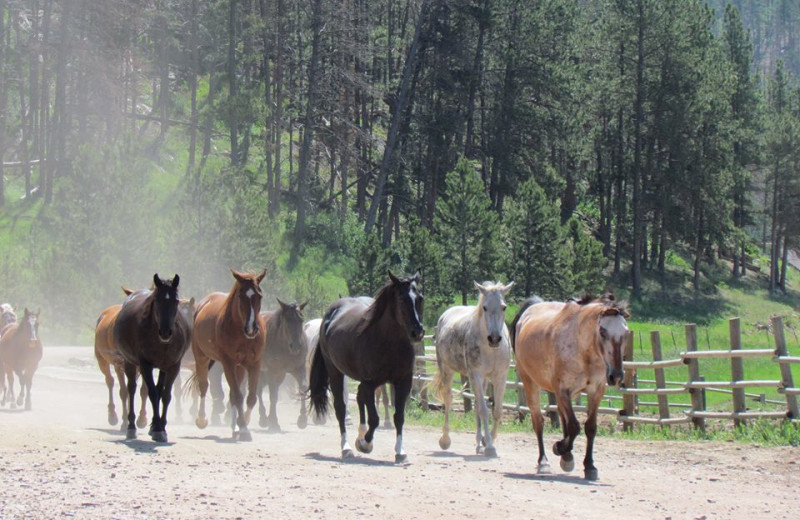 Horses running at High Country Guest Ranch.