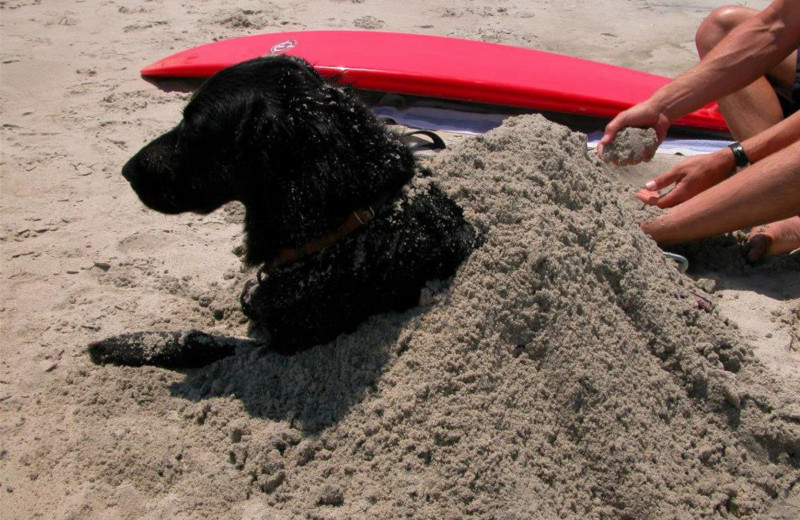 Dog on beach at Realty World - First Coast Realty.