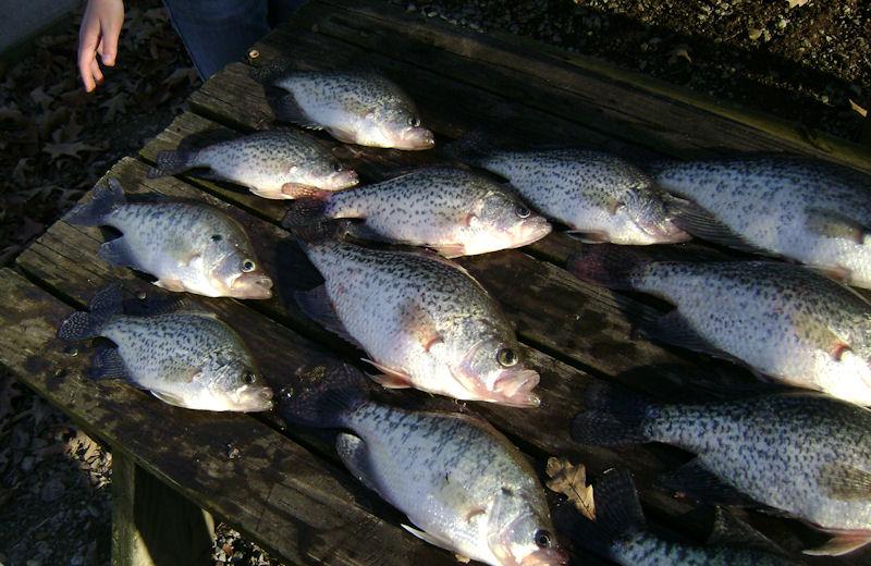 Fish fry at Malcolm Creek Resort & Marina.