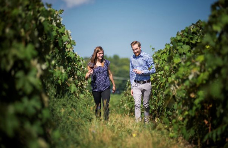 Couple Walking through Vineyards at Glenora Wine Cellars