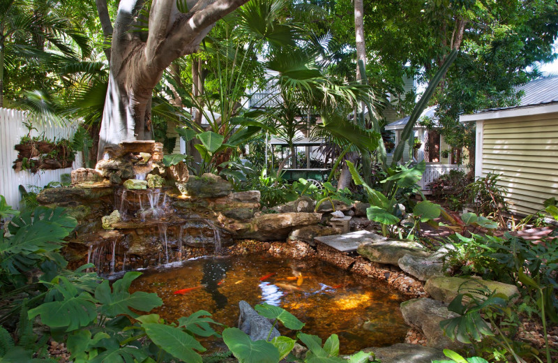 Koi pond at Island City House Hotel.