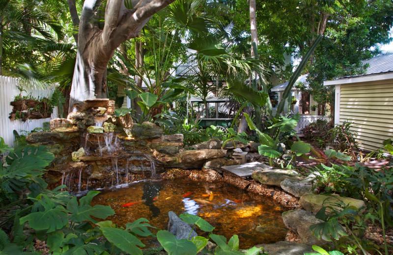 Koi pond at Island City House Hotel.