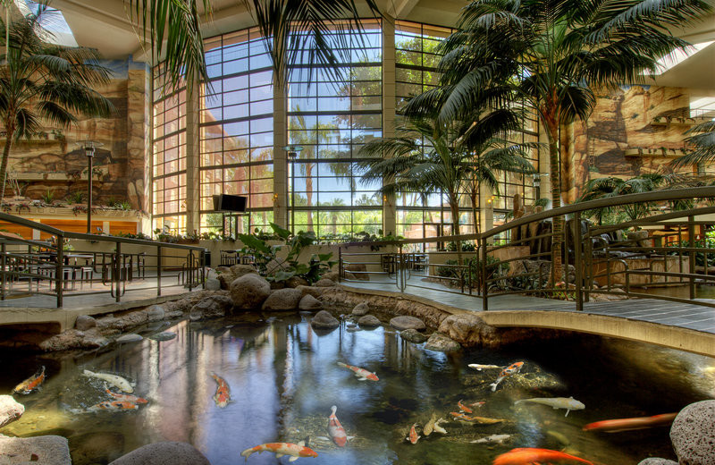 Pond at Embassy Suites Phoenix - Biltmore.