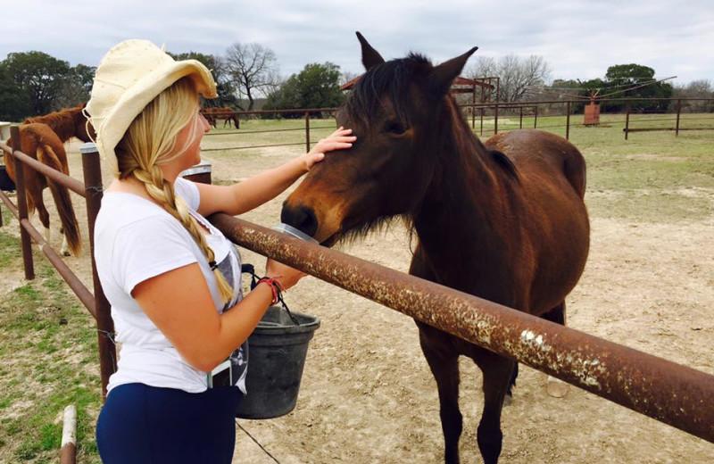 Horses at Fredericksburg Ranch.