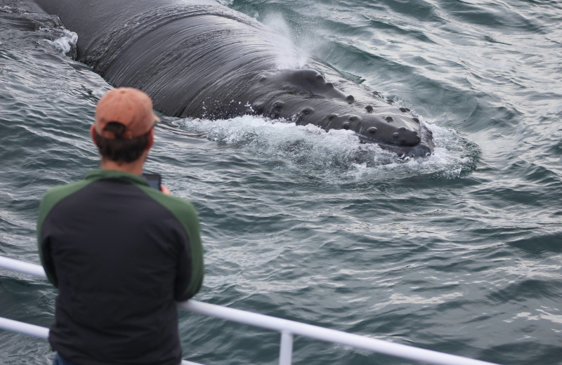 Whale watching at Brier Island Lodge and Resort.
