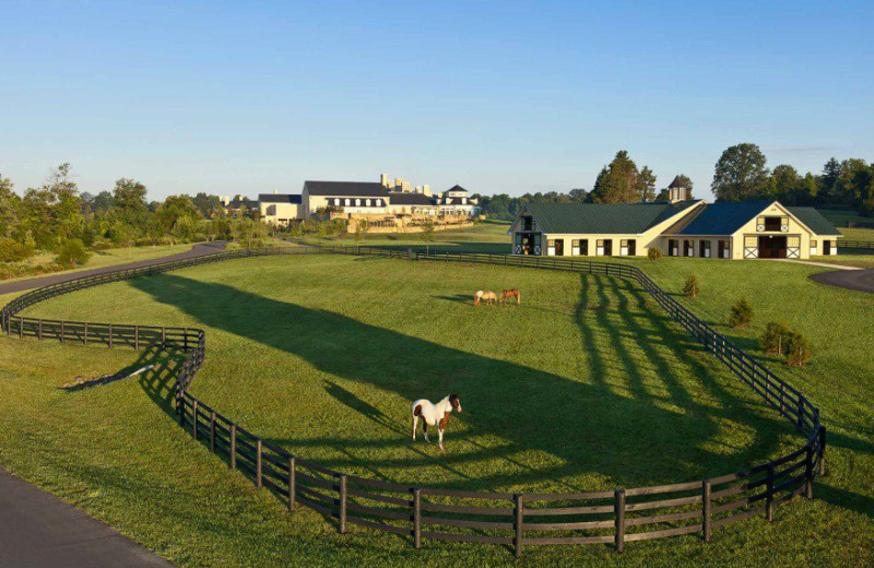 Horse pen at Salamander Resort & Spa.
