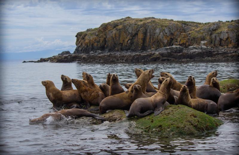 Seals at Adobe Resort.