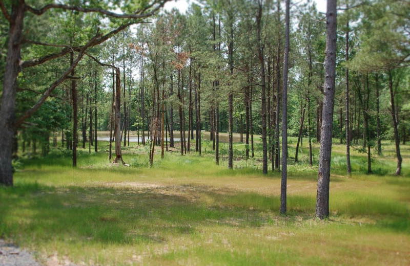 Forrest at Remember When Cabins.