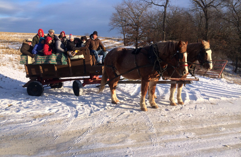 Sleigh ride at Stone Mill Hotel and Suites.