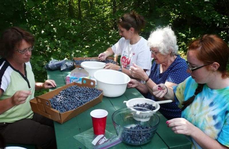 Family with blueberries at Woodside Cottages of Bayfield.
