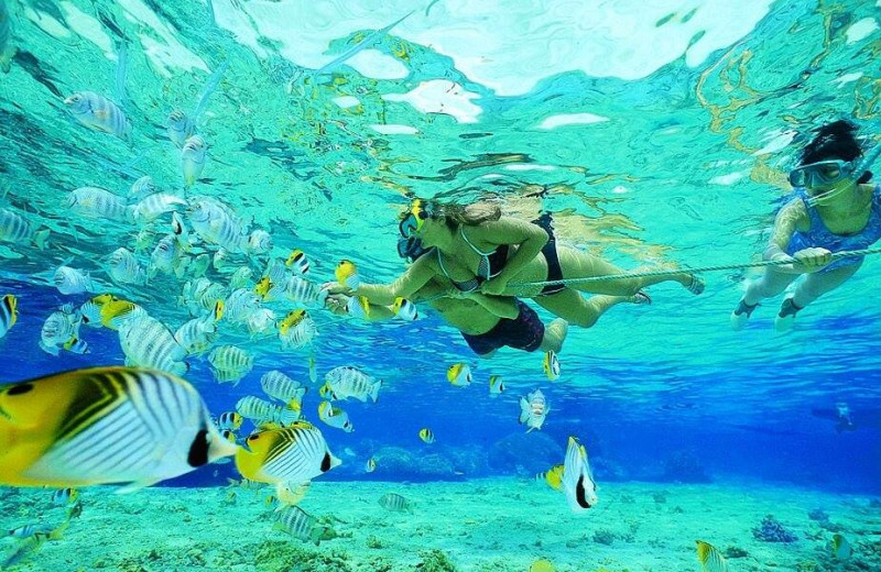 Snorkeling at Keys Holiday Rentals, Inc.