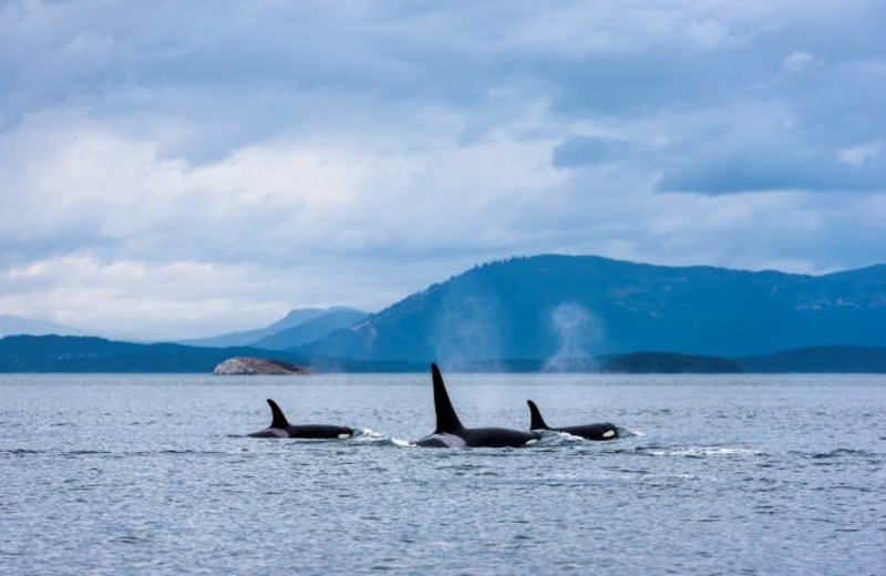 Whale watching at Wilderness Resort & Retreat.