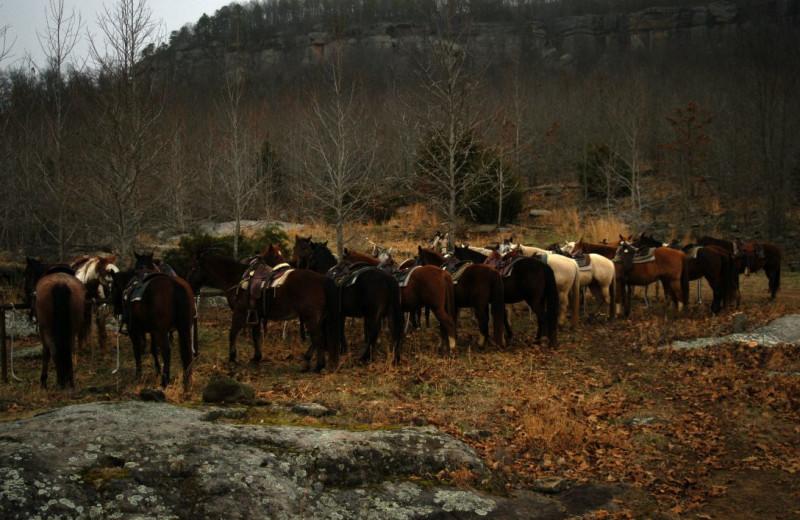 Horseback Rides at Horseshoe Canyon Ranch