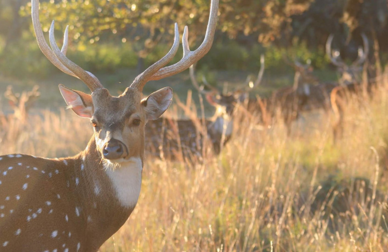 Deer at Joshua Creek Ranch.