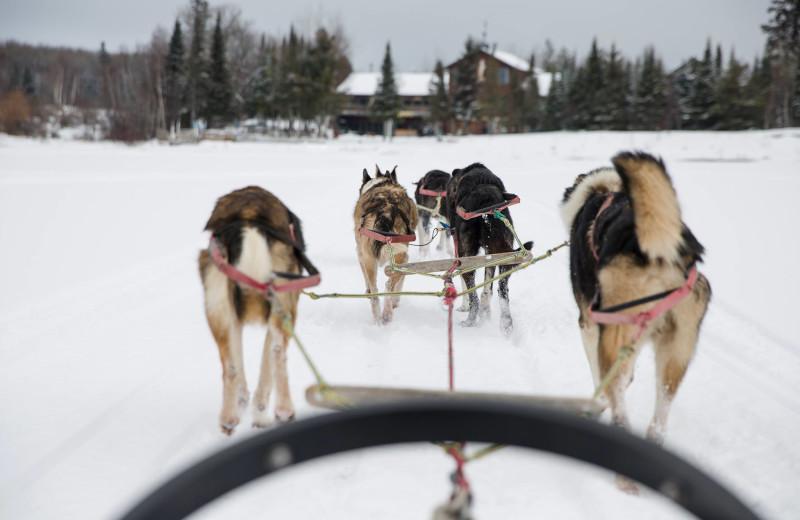 Dog sled at Skyport Lodge.