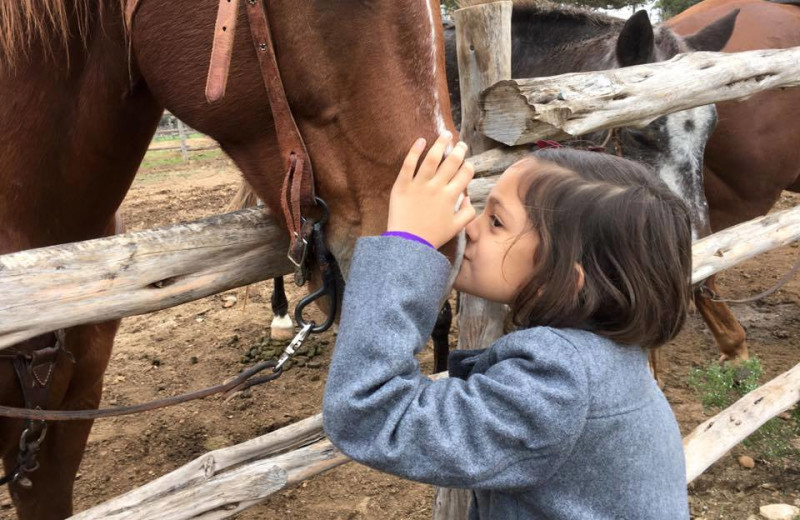 Girl petting horse at Twin Elm Ranch.