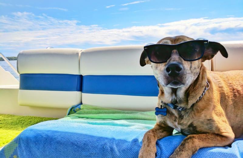 Pets welcome at Havasu Springs Resort.