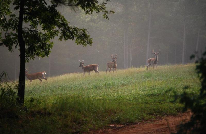 Deer at Goodman Ranch.