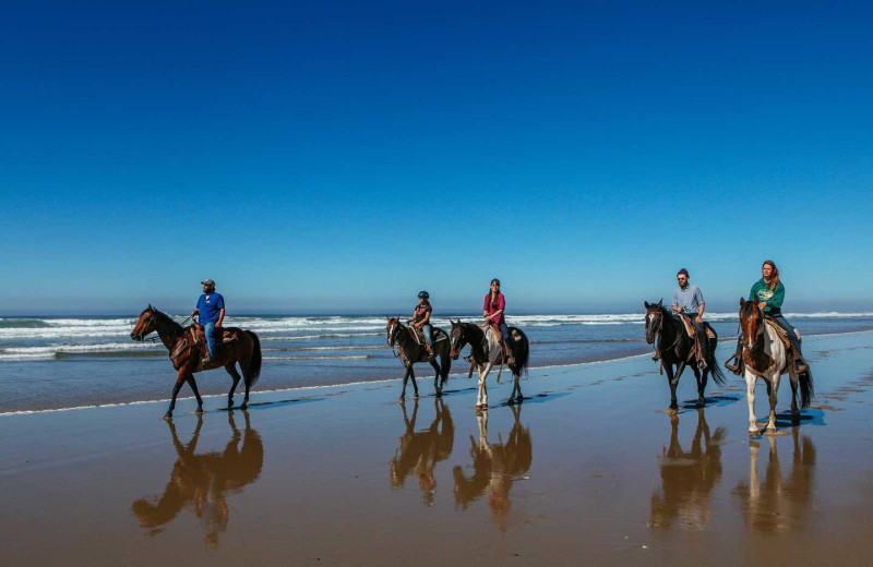 Horseback riding on beach at Driftwood Shores Resort and Conference Center.