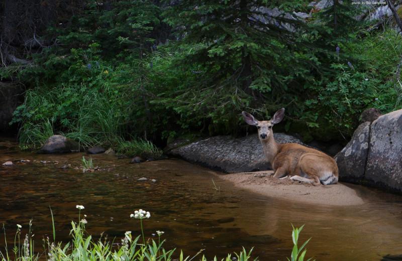 Nature at Clark Fork River Lodge.