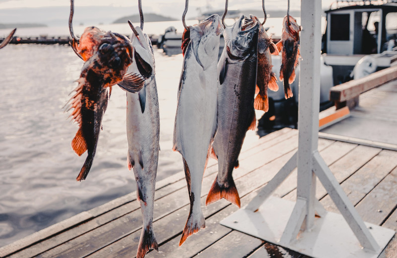 Fish on display on the dock after a fishing trip.