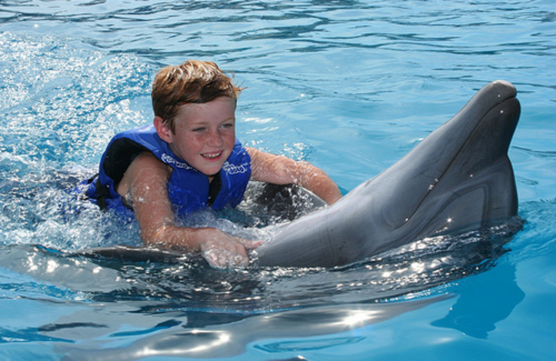 Swimming with the dolphins at Hilton Los Cabos Resort.