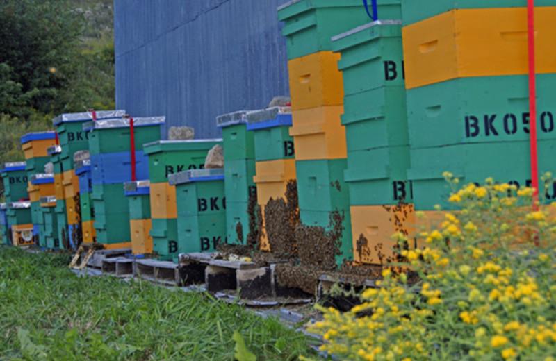 Bees at Crown Jewel Resort Ranch.