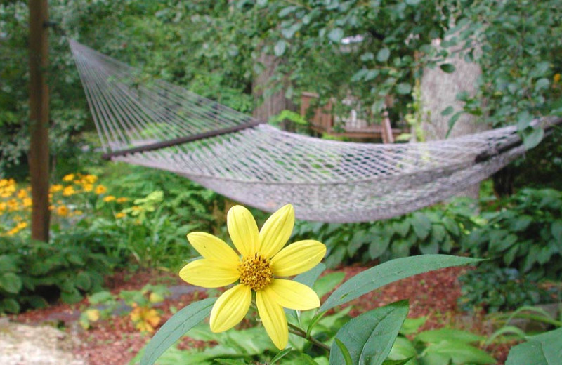 Hammock at Brook Farm Inn.