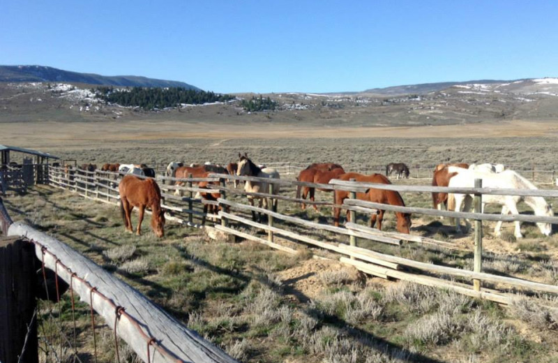 Ranch Activites at Latigo Ranch