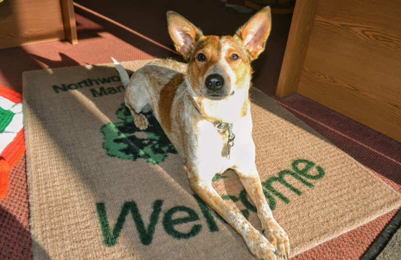 Pets welcome at Northwoods Property Management.