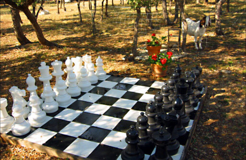 Life size chess at Country Sun Bed & Breakfast.