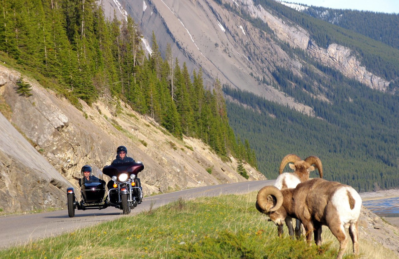 Motorcycle touring at Mount Robson Inn.