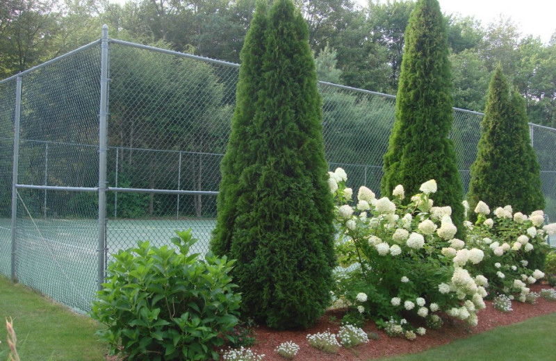 Tennis court at Pink Blossoms Resort.