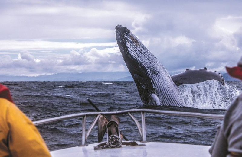 Whale watching at Salmon Catcher Lodge.