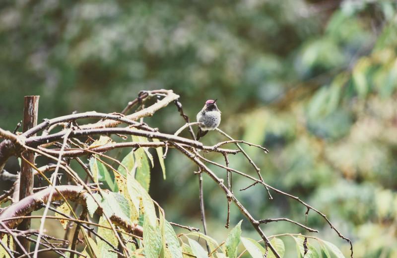 Bird at Ocean Wilderness Inn & Spa Retreat.