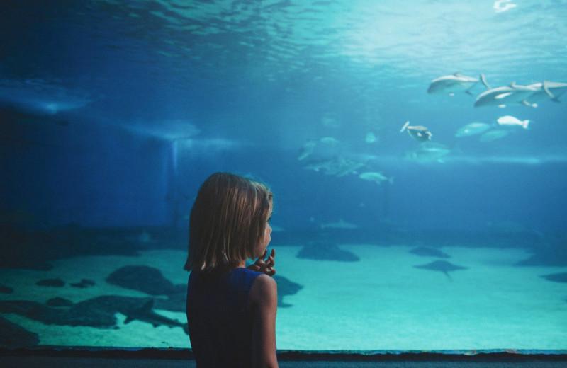 Aquarium near American Mountain Rentals.