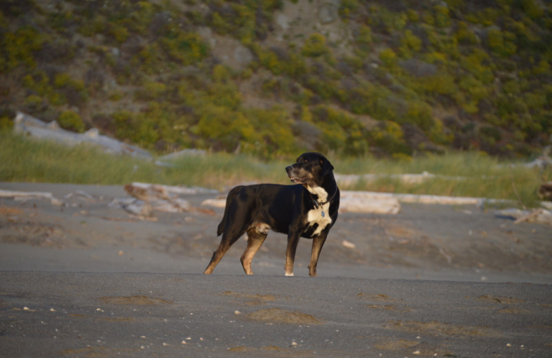Pets welcome at Irish Beach Vacation Rentals.