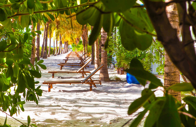 Beach chairs at Parrot Key Resort.