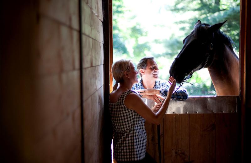 Horses at Topnotch Resort.